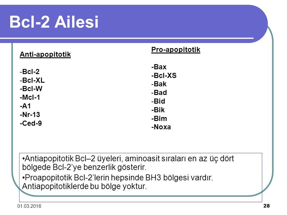 01.03.2016 28 Bcl-2 Ailesi Anti-apopitotik -Bcl-2 -Bcl-XL -Bcl-W -Mcl-1 -A1 -Nr-13 -Ced-9 Pro-apopitotik -Bax -Bcl-XS -Bak -Bad -Bid -Bik -Bim -Noxa A