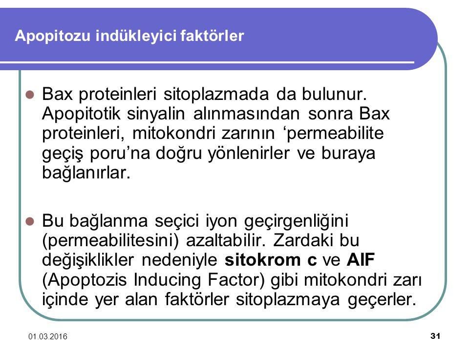 01.03.2016 31 Apopitozu indükleyici faktörler Bax proteinleri sitoplazmada da bulunur. Apopitotik sinyalin alınmasından sonra Bax proteinleri, mitokon