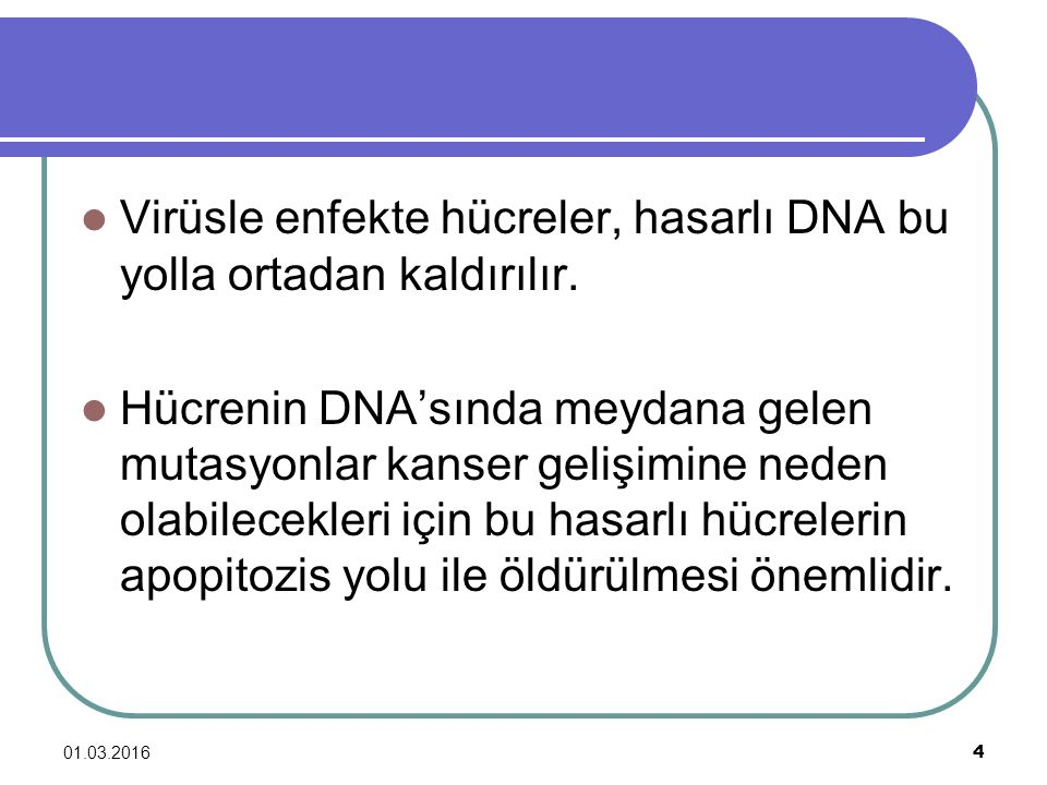 01.03.2016 4 Virüsle enfekte hücreler, hasarlı DNA bu yolla ortadan kaldırılır. Hücrenin DNA'sında meydana gelen mutasyonlar kanser gelişimine neden o