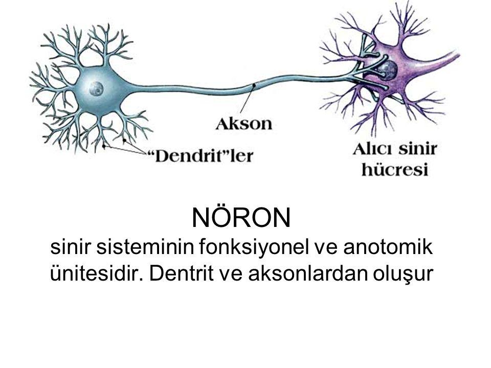NÖRON sinir sisteminin fonksiyonel ve anotomik ünitesidir. Dentrit ve aksonlardan oluşur