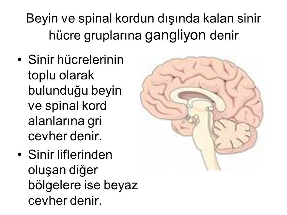 Beyin ve spinal kordun dışında kalan sinir hücre gruplarına gangliyon denir Sinir hücrelerinin toplu olarak bulunduğu beyin ve spinal kord alanlarına