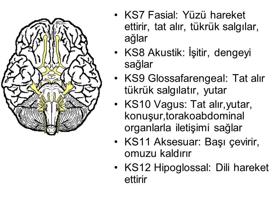 KS7 Fasial: Yüzü hareket ettirir, tat alır, tükrük salgılar, ağlar KS8 Akustik: İşitir, dengeyi sağlar KS9 Glossafarengeal: Tat alır tükrük salgılatır