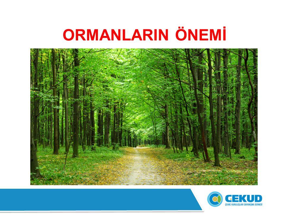 Dünyadaki toplam orman alanı 3 milyar 952 milyon hektardır.