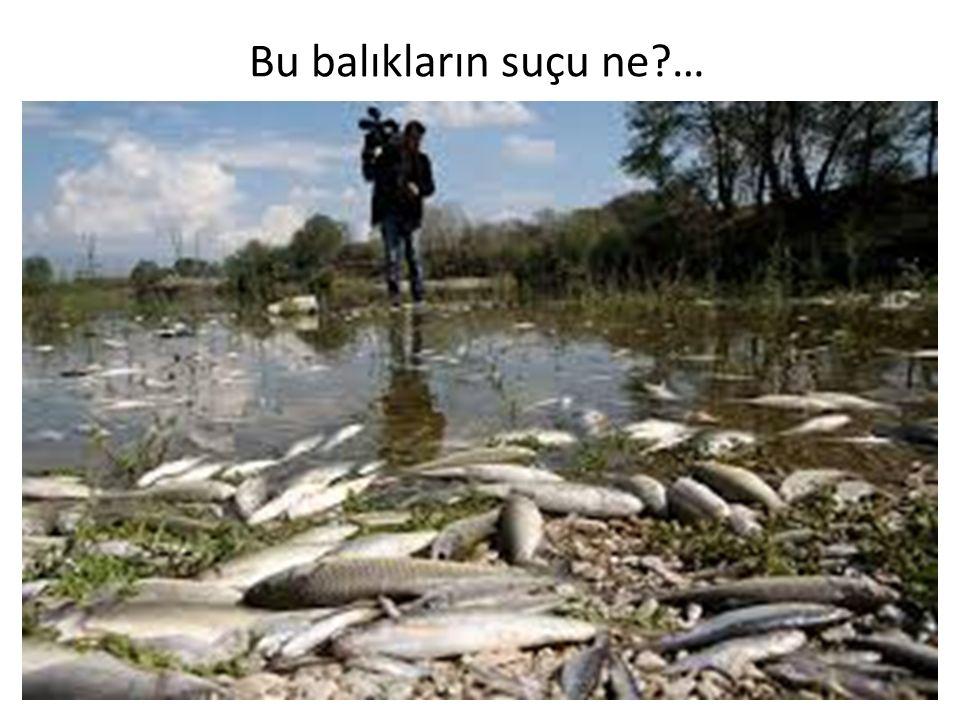 Bu balıkların suçu ne?…