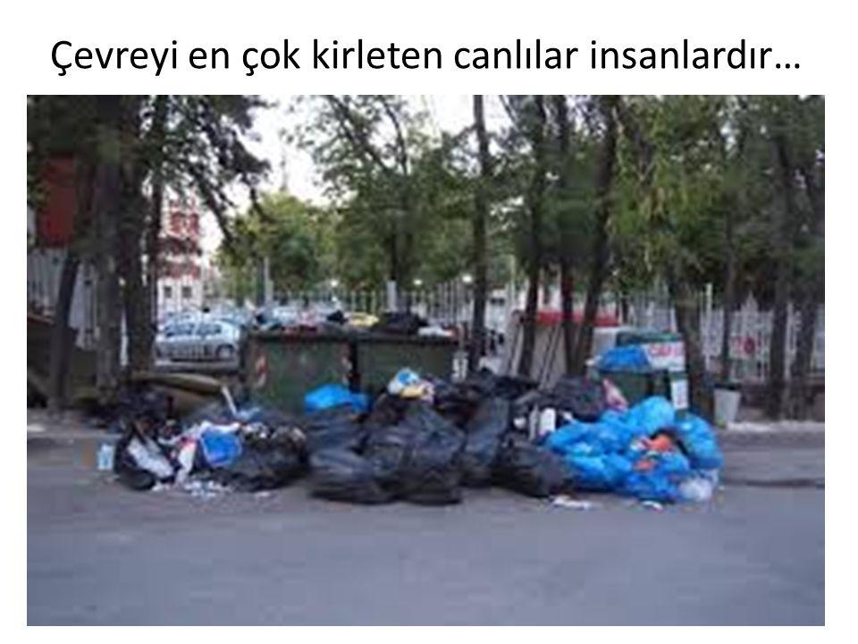 Çevreyi en çok kirleten canlılar insanlardır…