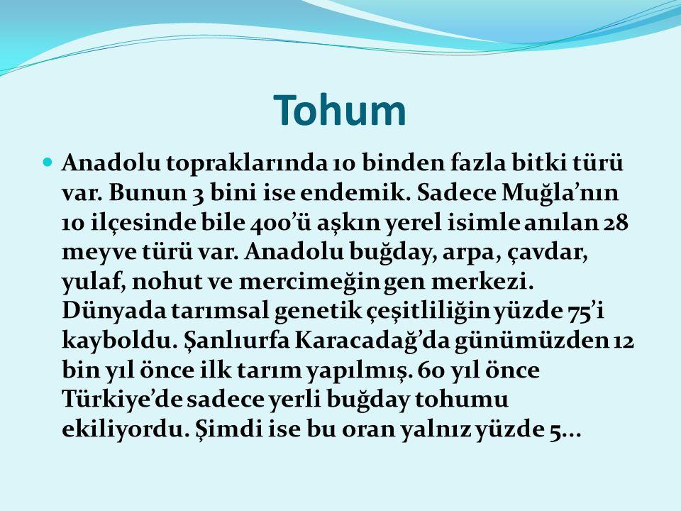 Tohum Anadolu topraklarında 10 binden fazla bitki türü var.
