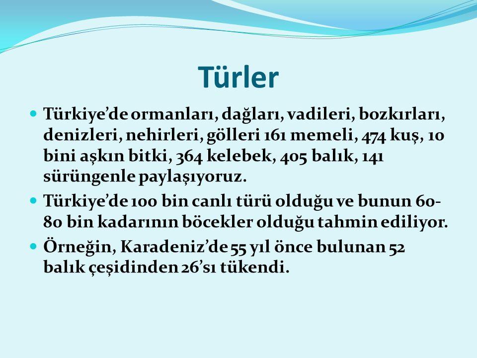 Türler Türkiye'de ormanları, dağları, vadileri, bozkırları, denizleri, nehirleri, gölleri 161 memeli, 474 kuş, 10 bini aşkın bitki, 364 kelebek, 405 balık, 141 sürüngenle paylaşıyoruz.