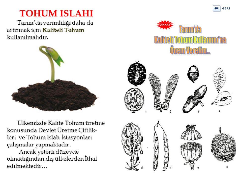 Tarım'da verimliliği daha da artırmak için Kaliteli Tohum kullanılmalıdır. Tarım'da verimliliği daha da artırmak için Kaliteli Tohum kullanılmalıdır.