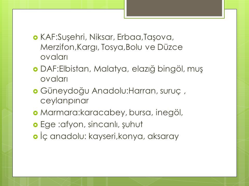  KAF:Suşehri, Niksar, Erbaa,Taşova, Merzifon,Kargı, Tosya,Bolu ve Düzce ovaları  DAF:Elbistan, Malatya, elazığ bingöl, muş ovaları  Güneydoğu Anado