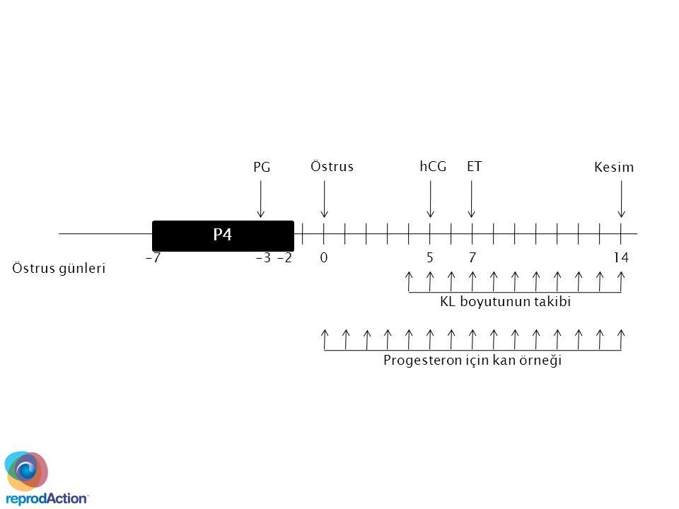 Kesim 14750 EThCGÖstrus -2-3-7 PG P4 Progesteron için kan örneği KL boyutunun takibi Östrus günleri