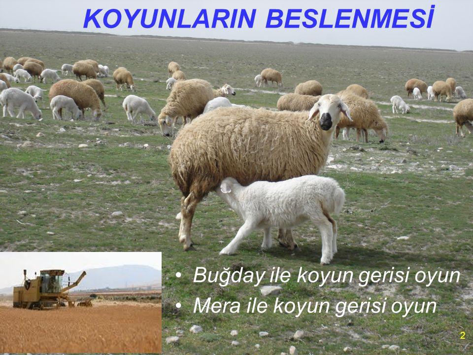 KOYUNLARIN BESLENMESİ Buğday ile koyun gerisi oyun Mera ile koyun gerisi oyun 2