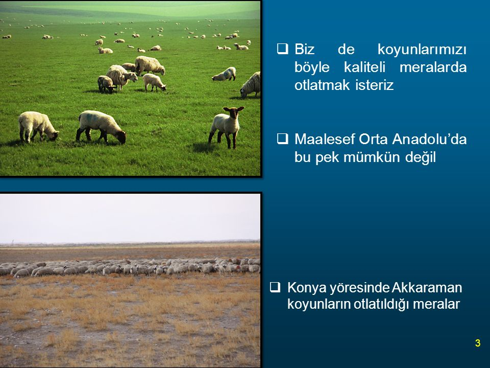  Koç katımı (sıfat) öncesi ilave bir yemleme ile koyunların kondisyonları iyi bir duruma getirilerek kızgınlık toplulaştırılır.
