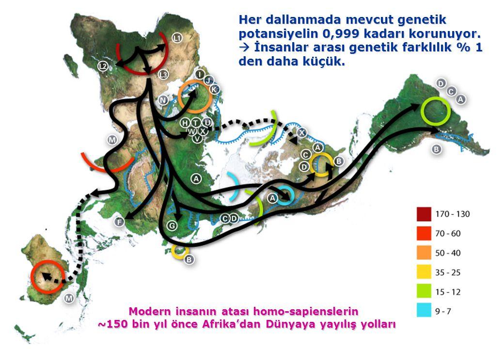 olu insanı genetik olarak yaklaşık 1/3 oranında asyalı, 2/3 oranında avrupalı kavimlerin karışımındandır..