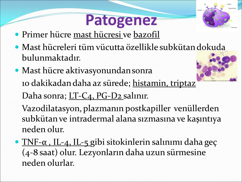 Patogenez Primer hücre mast hücresi ve bazofil Mast hücreleri tüm vücutta özellikle subkütan dokuda bulunmaktadır. Mast hücre aktivasyonundan sonra 10