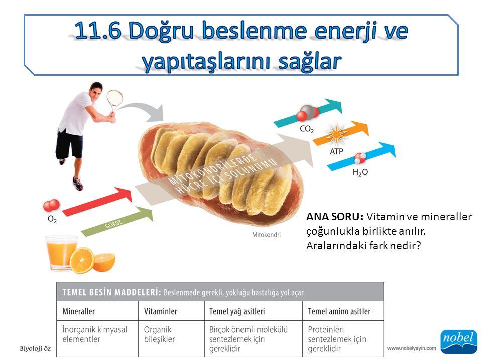 ANA SORU: Vitamin ve mineraller çoğunlukla birlikte anılır. Aralarındaki fark nedir