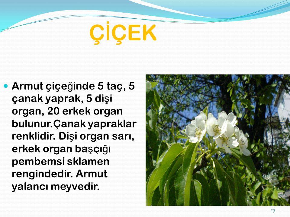 25 Ç İ ÇEK Armut çiçe ğ inde 5 taç, 5 çanak yaprak, 5 di ş i organ, 20 erkek organ bulunur.Çanak yapraklar renklidir.