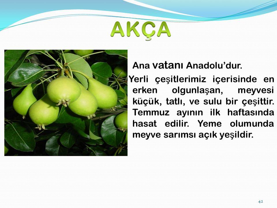 42 Ana vatanı Anadolu'dur.
