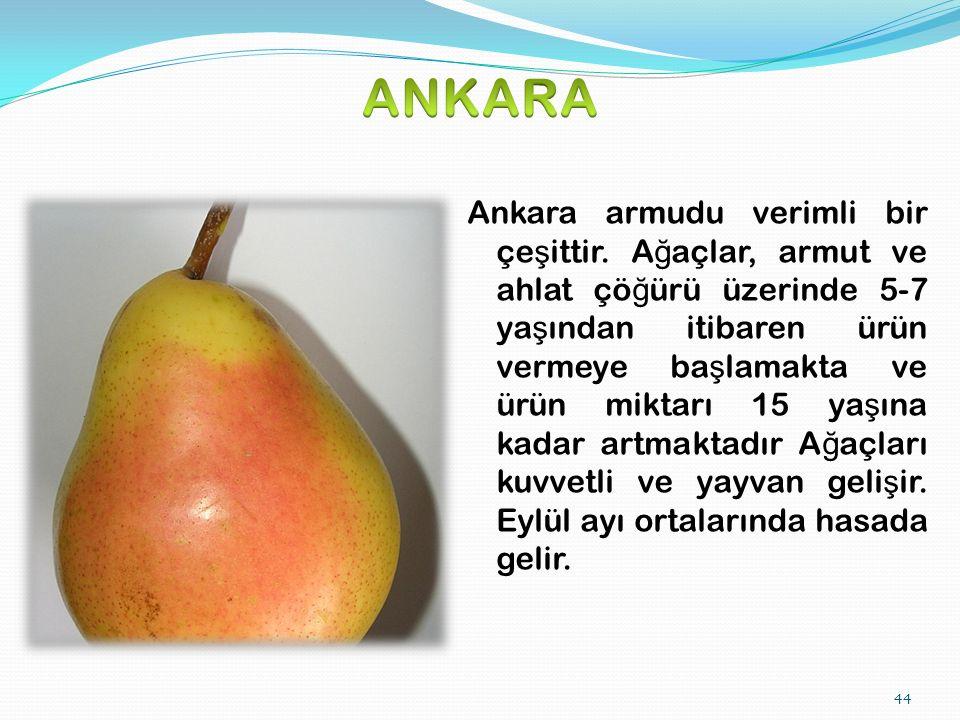 44 Ankara armudu verimli bir çe ş ittir.