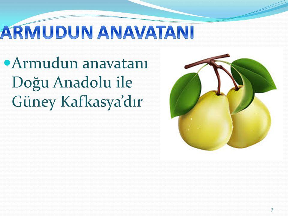 5 Armudun anavatanı Doğu Anadolu ile Güney Kafkasya'dır