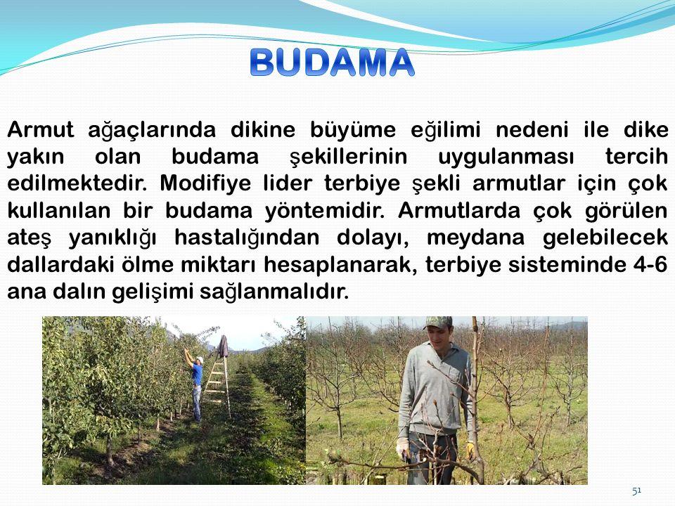 Armut a ğ açlarında dikine büyüme e ğ ilimi nedeni ile dike yakın olan budama ş ekillerinin uygulanması tercih edilmektedir.
