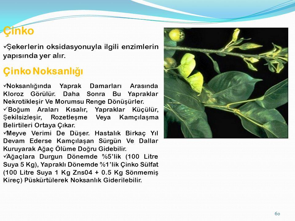 60 Çinko Ş ekerlerin oksidasyonuyla ilgili enzimlerin yapısında yer alır.