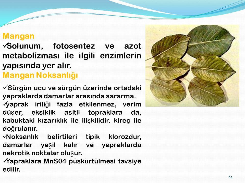 62 Mangan Solunum, fotosentez ve azot metabolizması ile ilgili enzimlerin yapısında yer alır.