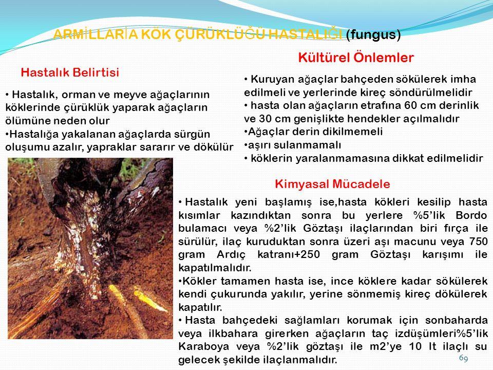 69 ARM İ LLAR İ A KÖK ÇÜRÜKLÜ Ğ Ü HASTALI Ğ I (fungus) Hastalık Belirtisi Hastalık, orman ve meyve a ğ açlarının köklerinde çürüklük yaparak a ğ açların ölümüne neden olur Hastalı ğ a yakalanan a ğ açlarda sürgün olu ş umu azalır, yapraklar sararır ve dökülür Kültürel Önlemler Kuruyan a ğ açlar bahçeden sökülerek imha edilmeli ve yerlerinde kireç söndürülmelidir hasta olan a ğ açların etrafına 60 cm derinlik ve 30 cm geni ş likte hendekler açılmalıdır A ğ açlar derin dikilmemeli a ş ırı sulanmamalı köklerin yaralanmamasına dikkat edilmelidir Kimyasal Mücadele Hastalık yeni ba ş lamı ş ise,hasta kökleri kesilip hasta kısımlar kazındıktan sonra bu yerlere %5'lik Bordo bulamacı veya %2'lik Gözta ş ı ilaçlarından biri fırça ile sürülür, ilaç kuruduktan sonra üzeri a ş ı macunu veya 750 gram Ardıç katranı+250 gram Gözta ş ı karı ş ımı ile kapatılmalıdır.