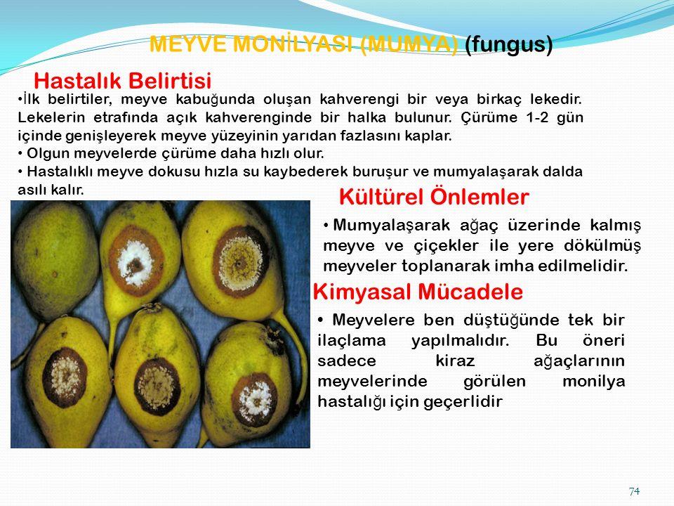 MEYVE MON İ LYASI (MUMYA) (fungus) Hastalık Belirtisi İ lk belirtiler, meyve kabu ğ unda olu ş an kahverengi bir veya birkaç lekedir.