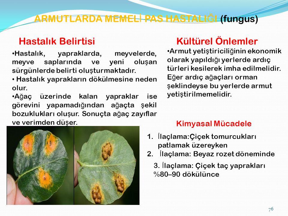 ARMUTLARDA MEMEL İ PAS HASTALI Ğ I (fungus) Hastalık Belirtisi Hastalık, yapraklarda, meyvelerde, meyve saplarında ve yeni olu ş an sürgünlerde belirti olu ş turmaktadır.