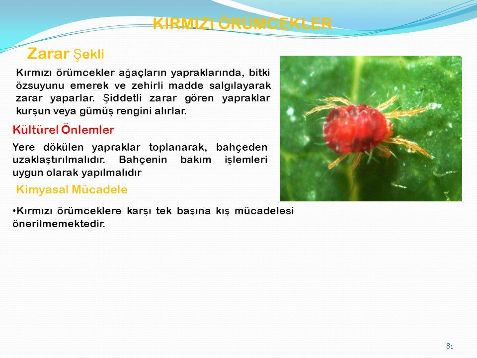 KIRMIZI ÖRÜMCEKLER Zarar Ş ekli Kırmızı örümcekler a ğ açların yapraklarında, bitki özsuyunu emerek ve zehirli madde salgılayarak zarar yaparlar.