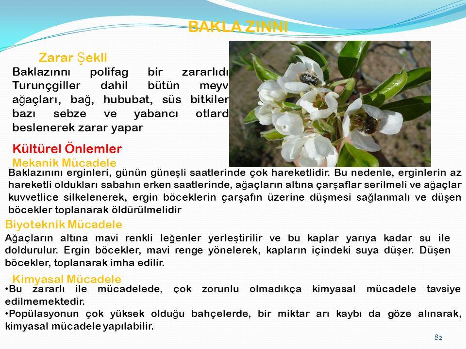 BAKLA ZINNI Zarar Ş ekli Baklazınnı polifag bir zararlıdır.