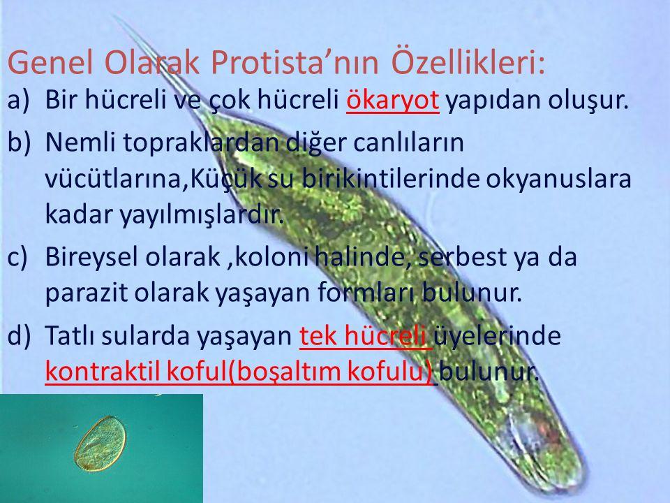 Genel Olarak Protista'nın Özellikleri: a)Bir hücreli ve çok hücreli ökaryot yapıdan oluşur.