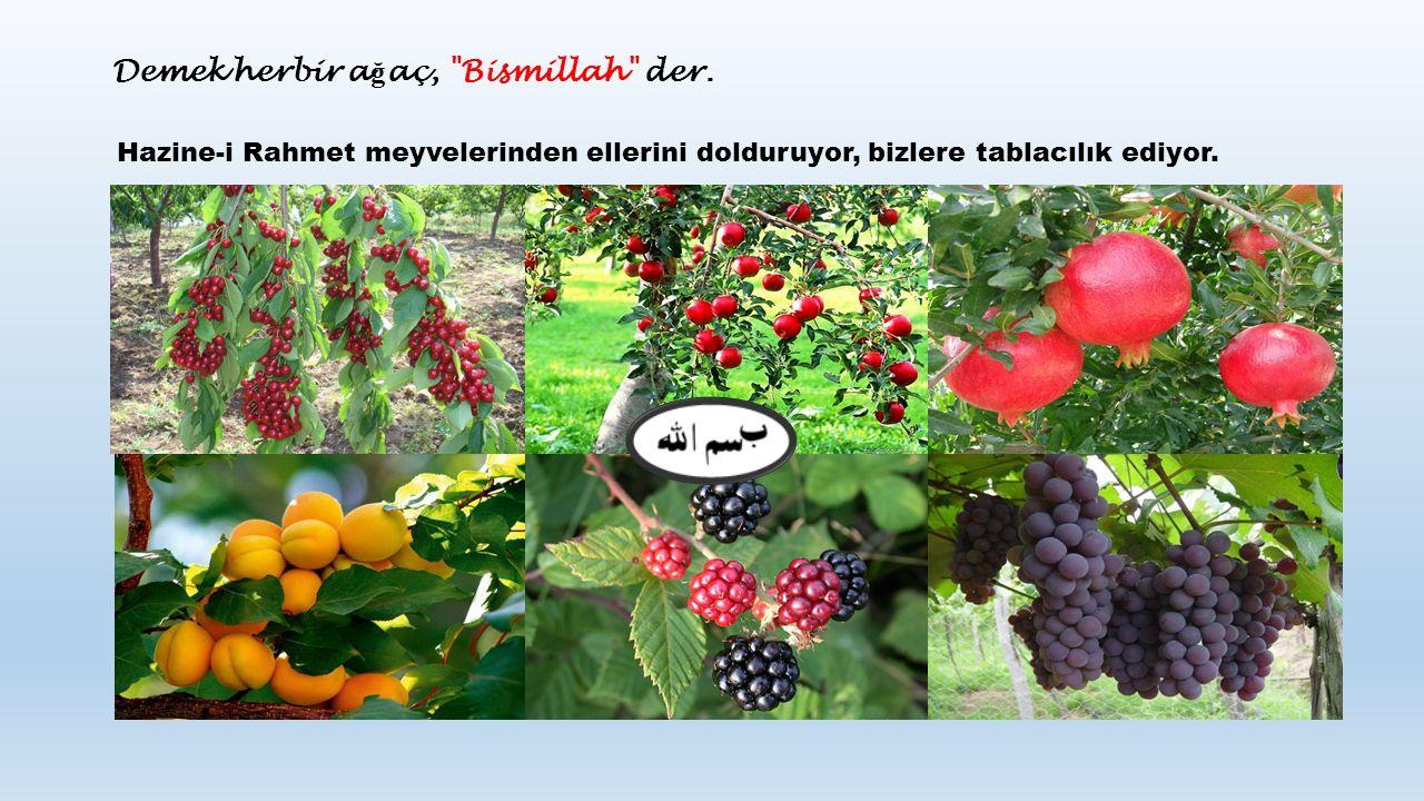 Hazine-i Rahmet meyvelerinden ellerini dolduruyor, bizlere tablacılık ediyor.