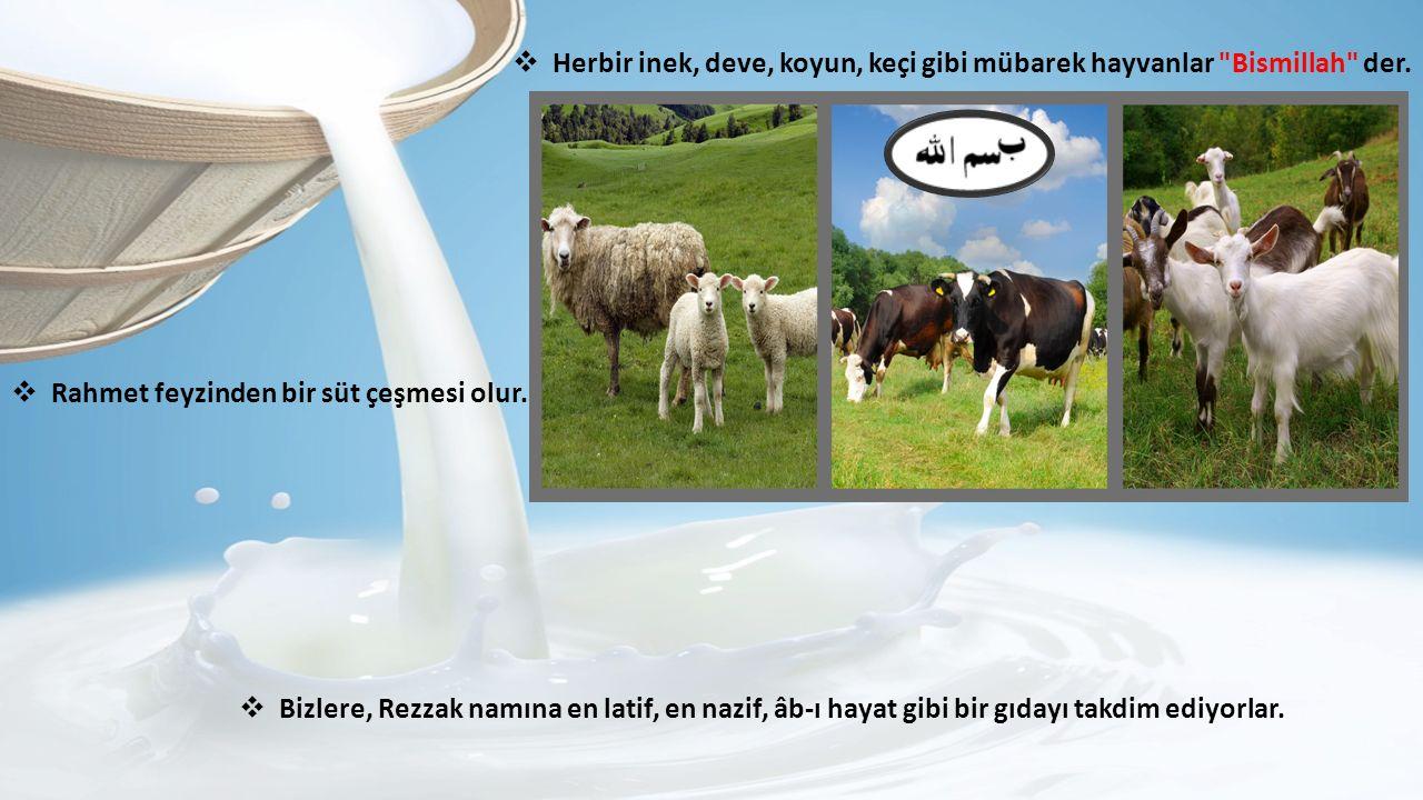  Herbir inek, deve, koyun, keçi gibi mübarek hayvanlar