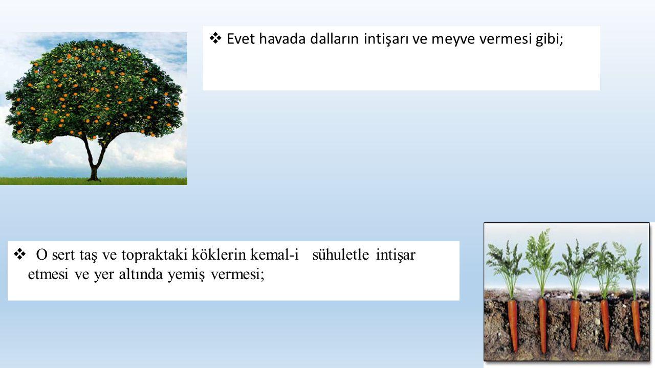  Evet havada dalların intişarı ve meyve vermesi gibi;  O sert taş ve topraktaki köklerin kemal-i sühuletle intişar etmesi ve yer altında yemiş verme