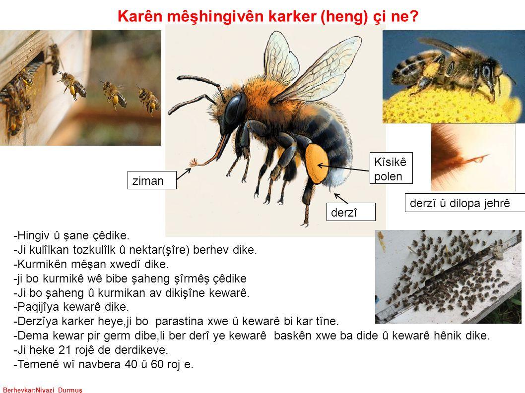Berhevkar:Niyazi Durmuş Karên mêşhingivên karker (heng) çi ne.