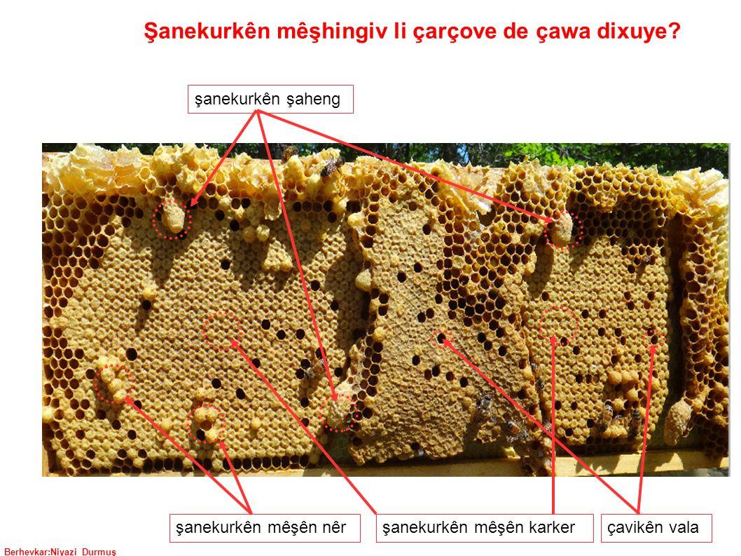 Berhevkar:Niyazi Durmuş şanekurkên şaheng şanekurkên mêşên nêrşanekurkên mêşên karkerçavikên vala Şanekurkên mêşhingiv li çarçove de çawa dixuye