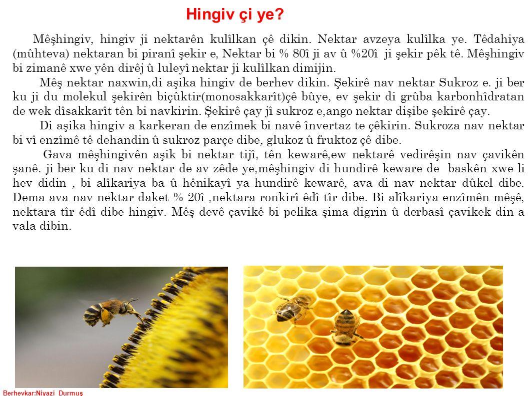 Berhevkar:Niyazi Durmuş Mêşhingiv, hingiv ji nektarên kulîlkan çê dikin.