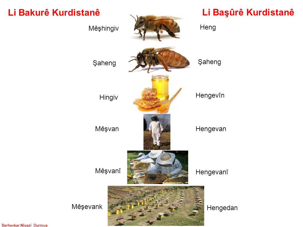 Berhevkar:Niyazi Durmuş Li Başûrê Kurdistanê Li Bakurê Kurdistanê Mêşhingiv Heng Şaheng Hingiv Hengevîn Hengevan Mêşvan Mêşvanî Mêşevank Hengevanî Hengedan