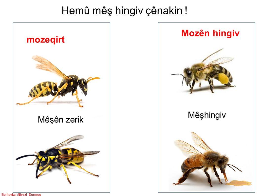 Berhevkar:Niyazi Durmuş Mêşên zerik Mêşhingiv mozeqirt Mozên hingiv Hemû mêş hingiv çênakin !