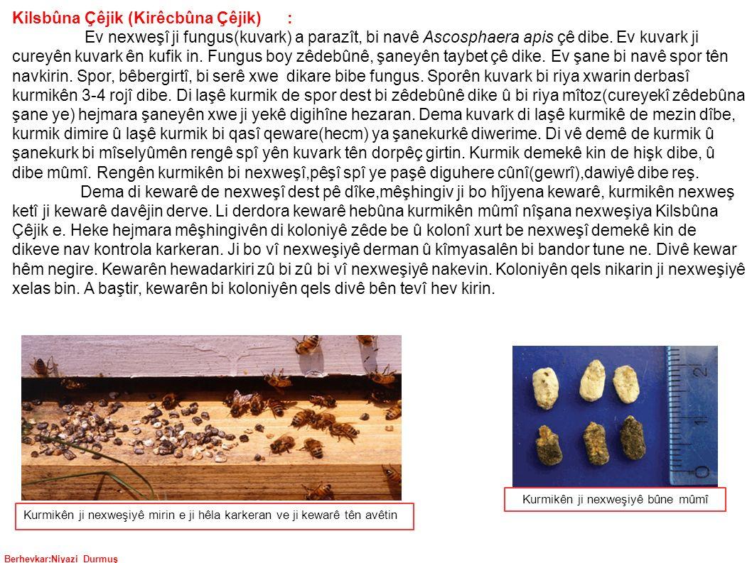 Berhevkar:Niyazi Durmuş Kilsbûna Çêjik (Kirêcbûna Çêjik) : Ev nexweşî ji fungus(kuvark) a parazît, bi navê Ascosphaera apis çê dibe.