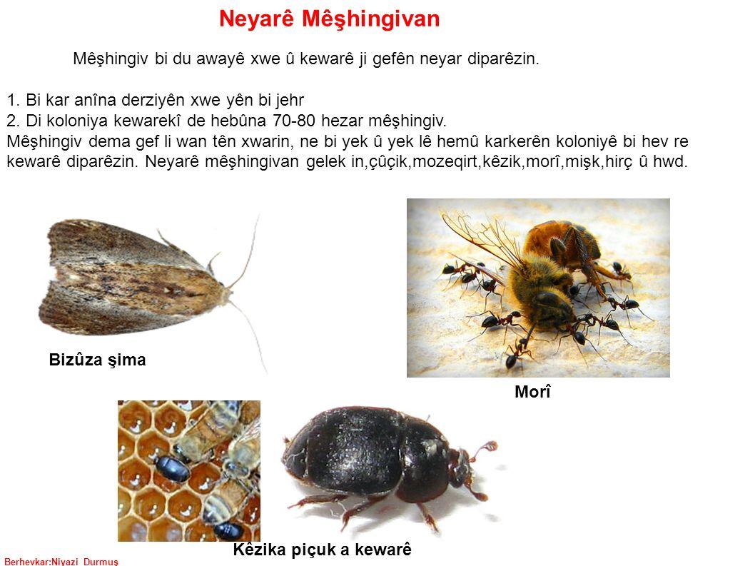 Berhevkar:Niyazi Durmuş Neyarê Mêşhingivan Mêşhingiv bi du awayê xwe û kewarê ji gefên neyar diparêzin.