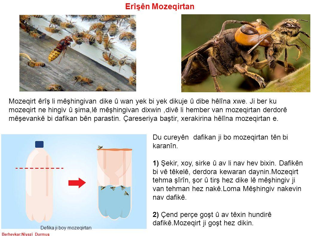 Berhevkar:Niyazi Durmuş Mozeqirt êrîş li mêşhingivan dike û wan yek bi yek dikuje û dibe hêlîna xwe.