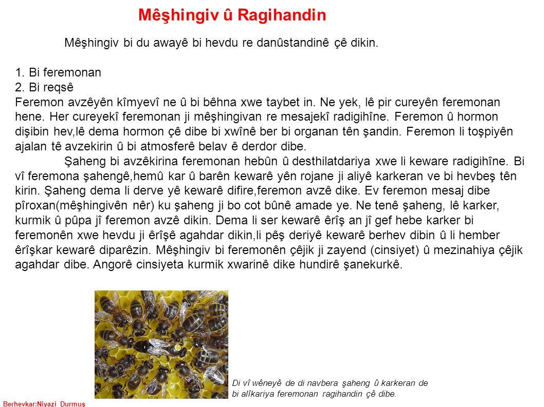 Berhevkar:Niyazi Durmuş Mêşhingiv û Ragihandin Mêşhingiv bi du awayê bi hevdu re danûstandinê çê dikin.
