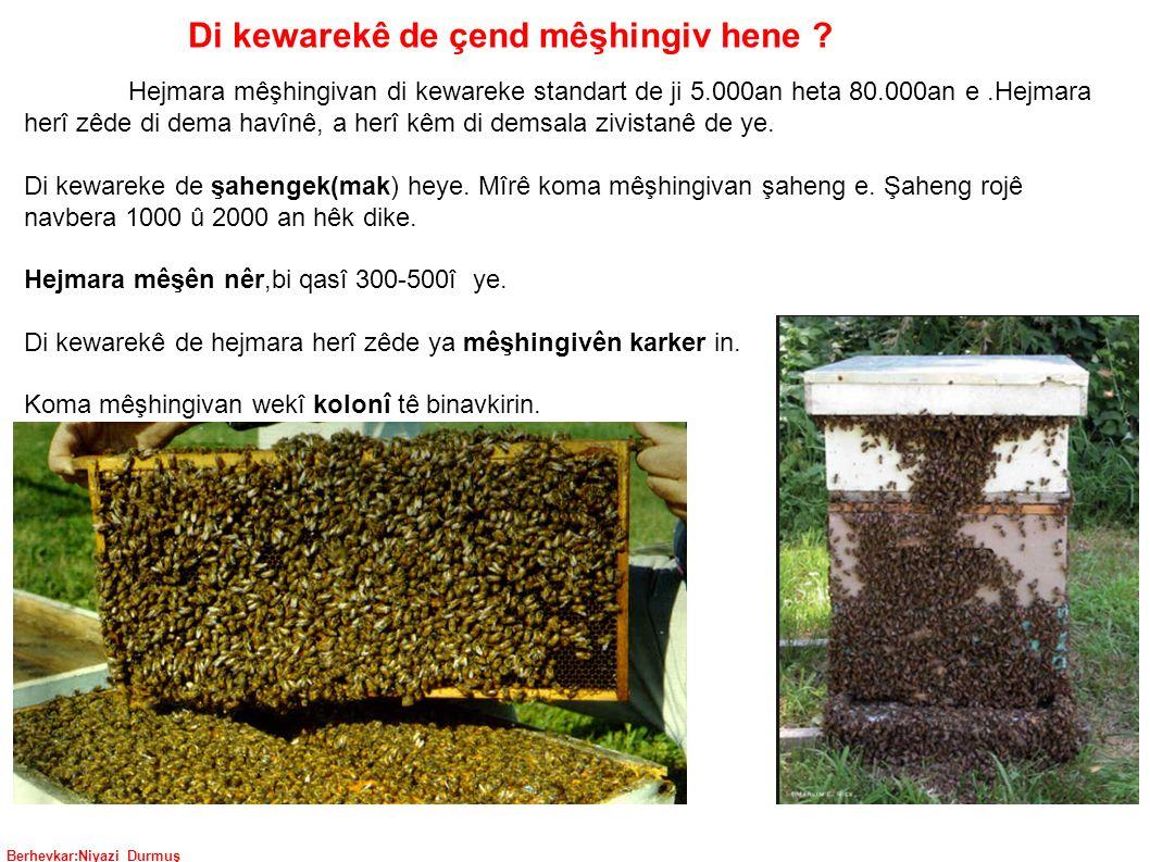 Berhevkar:Niyazi Durmuş Di kewarekê de çend mêşhingiv hene .