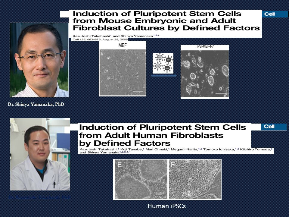 Dr. Shinya Yamanaka, PhD Human iPSCs Dr. Kazutoshi Takahashi, PhD
