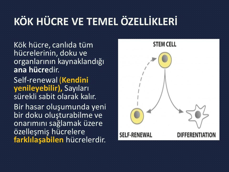 Kök hücre, canlıda tüm hücrelerinin, doku ve organlarının kaynaklandığı ana hücredir. Self-renewal (Kendini yenileyebilir), Sayıları sürekli sabit ola