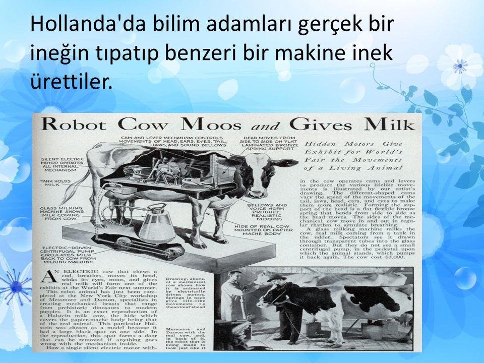 Bunu yaparken amaçları daha kaliteli ve daha fazla süt üretmekti.