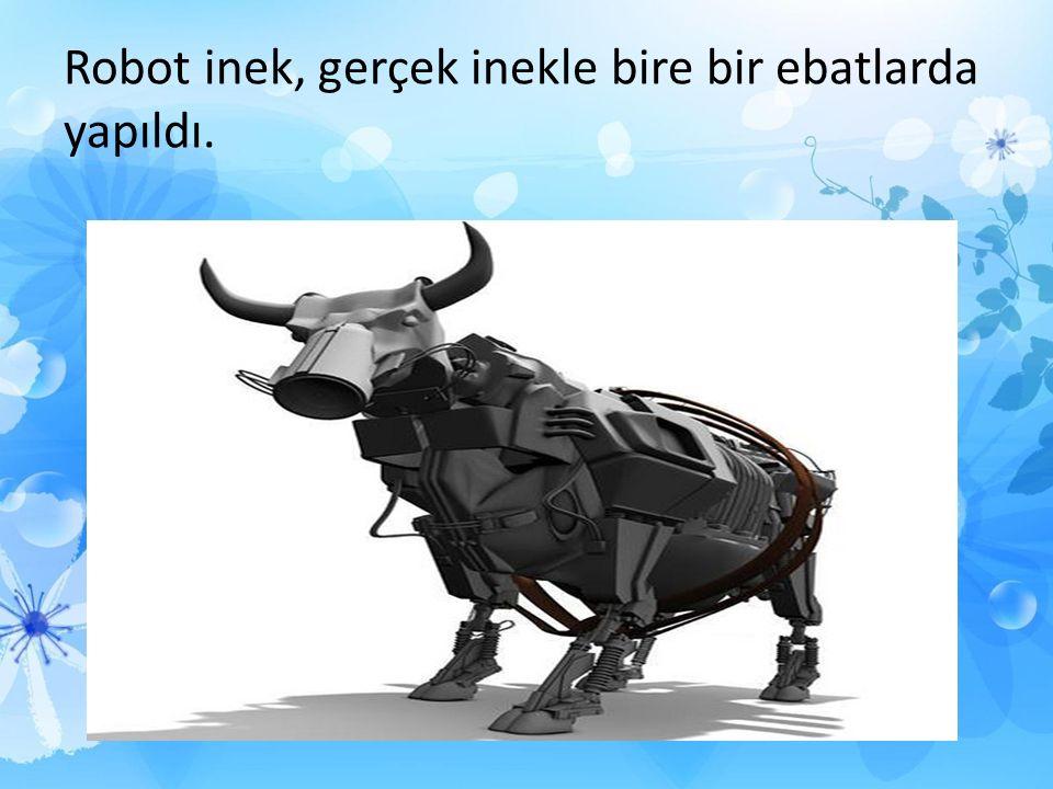 Robot inek, gerçek inekle bire bir ebatlarda yapıldı.