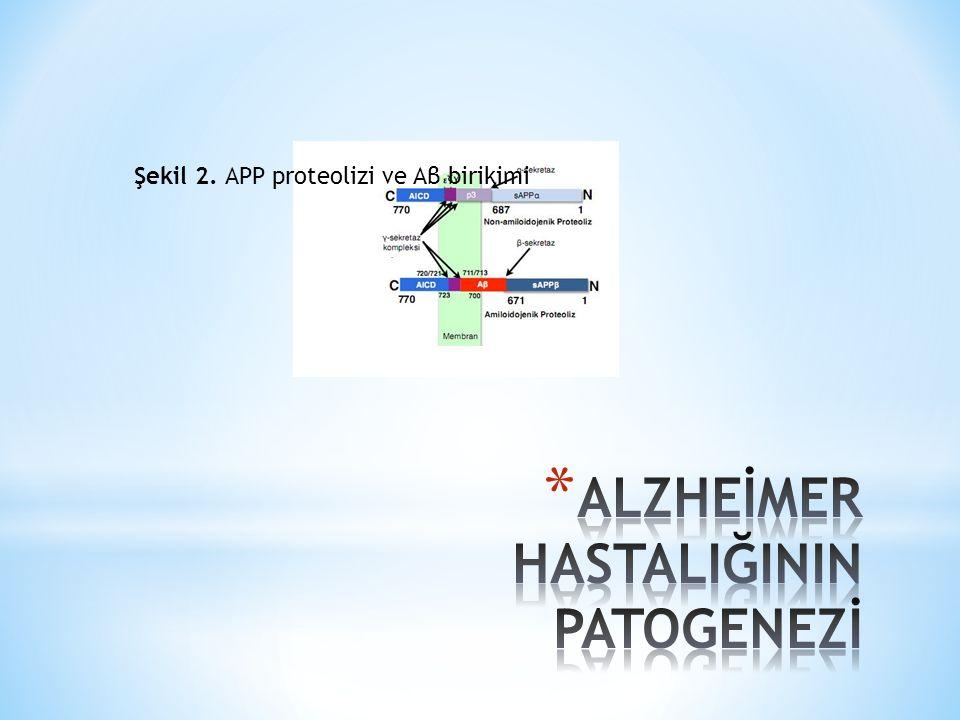 Şekil 2. APP proteolizi ve Aβ birikimi